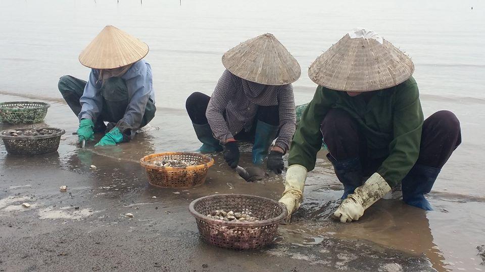 Đồng vốn chính sách đã giúp nhiều hộ dân huyện Cát Hải mở rộng sản xuất, tạo việc làm cho người lao động