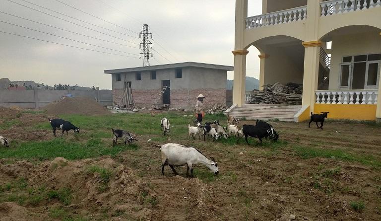 Nhiều hộ vay vốn NHCSXH tại xã Quốc Tuấn vươn lên thoát nghèo