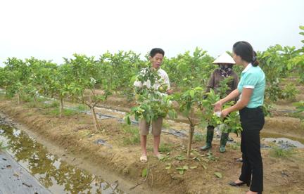 Cán bộ Hội LHPN xã An Hòa (huyện An Dương) và Ngân hàng Chính sách xã hội chi nhánh Hải Phòng kiểm tra thực tế sử dụng vốn vay gia đình chị Ngô Thị Huê ở thôn Hà Nhuận 1.